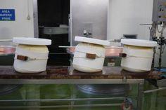 parmesan cheese making