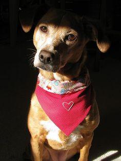 My new craft. Dog bandanas!