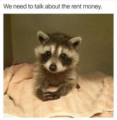 I wish i could've discussed the mortgage with the raccoons that squatted in my attic. Super Cute Animals, Cute Funny Animals, Funny Animal Pictures, Cute Baby Animals, Funny Baby Memes, Funny Babies, Cute Babies, Cute Gif, Funny Cute