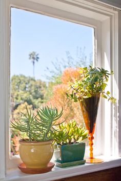 sneak peek: alissa walker and keith scharwath Succulents In Containers, Cacti And Succulents, Planting Succulents, Planting Flowers, Indoor Garden, Indoor Plants, Pot Plants, Succulent Gardening, Succulent Planters