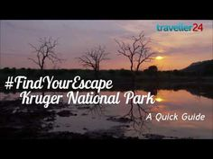Looking to go to the Kruger National Park? Here are a few things you should know... Also, check out CAT's awesome tours featuring Kruger >> https://www.cat-africa.com/en/crafted-programs?destinations%5B%5D=113&luxury=true&premium=true