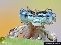 very cool... Dew-Soaked Bugs Are 'Small Monsters' In Ondrej Pakan's Macro Photo Series (PHOTOS)