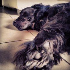 Un dog à Bordeaux Ma petite contribution à l'opération #PerleNoire parce qu'y a encore plein de potes qui attendent de trouver une gamelle bien pleine et un endroit chaud où poser les coussinets. Ne les oubliez pas, il sont par ici Seconde Chance. Et regardez donc chez Faust'in, j'ai trouvé mon sosie ! Tous unis pour la bonne cause. Benji -