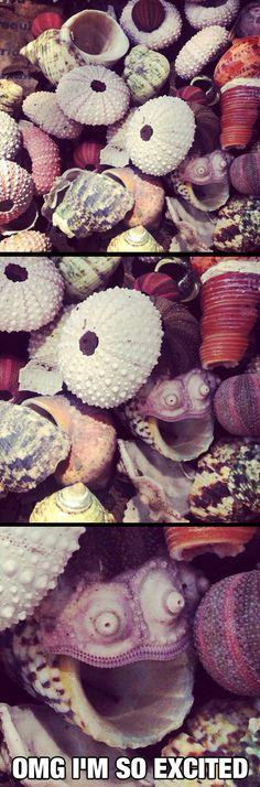 Happy Seashell Is Very Happy