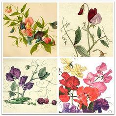 sweet pea flower ideas