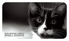 Using Pet Photography On Business Cards Design