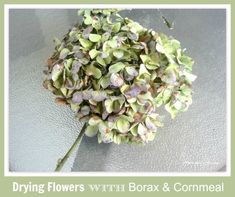 Dry Flowers With Borax Cornmeal Mixture