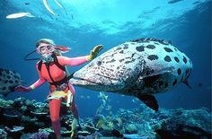 Would love to go snorkeling/scuba diving in the Great Barrier Reef!