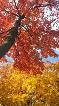 Autumn in Eindhoven - 2016