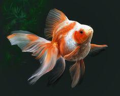 Goldfish by ~KoraRin on deviantART Gold Fish Painting, Koi Painting, Cute Creatures, Beautiful Creatures, Japanese Goldfish, Goldfish Tattoo, Oranda Goldfish, Oscar Fish, Cute Fish