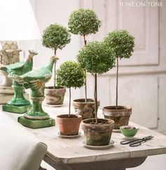 Tone on Tone - Interior & Garden Design: All About Myrtle Topiaries Topiary Plants, Topiary Garden, Indoor Garden, Garden Pots, Indoor Plants, Potted Garden, Boxwood Topiary, Container Gardening, Gardening Tips