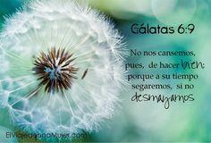 Gálatas 6:9 No nos cansemos, pues, de hacer bien; porque a su tiempo segaremos, si no desmayamos.♔