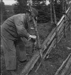 """CLOTÛRER. Il existe dans les pays scandinaves des clôtures appelées «Svensk Hegn"""" (Clôtures suédoises), elles sont entièrement fabriqués à partir des bois in-situ et sans aucune fixation métallique."""