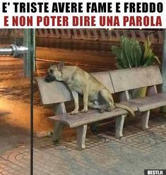 E' triste avere fame e freddo e non poter dire una. Cute Cats And Dogs, Animals And Pets, Dogs And Puppies, Cute Animals, Love Pet, I Love Dogs, Small Dog Breeds, Small Dogs, All Gods Creatures
