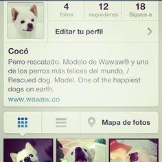 ¿Les gusta Cocó y quieren verlo cada día? Síganlo como @LoCocosito , está estrenando redes sociales.