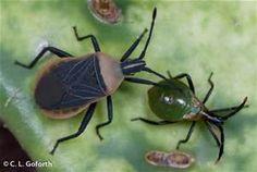 bugs - Bing Images