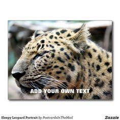 Sleepy Leopard Portrait Postcard