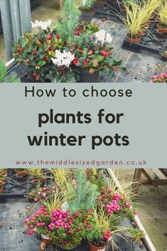 How to choose and plant winter pots and planters. Container gardening ideas and tips for winter success - because there are a few things you need to know about how winter planters are different. #containergarden #gardening #middlesizedgarden #backyard Small Gardens, Outdoor Gardens, Low Maintenance Garden Design, Winter Planter, Outdoor Fairy Lights, Garden Privacy, Colorful Garden, Garden Trees, Easy Garden