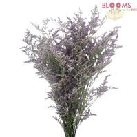 Limonium Misty Blue : Wholesale Flowers : Blooms By The Box  $19 for 15-20 stems