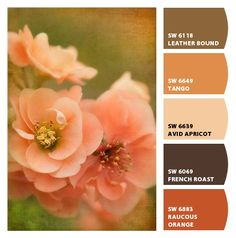 Warm Orange Paint Colors sherwin-williams orange paint color – yam (sw 6643) | all about