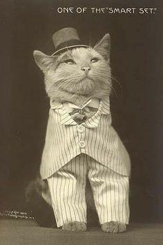 Aquí puedes ver cuáles son las razas de gatos más antiguos uwu y un poco de su historia 🌸 Korat, Crazy Cat Lady, Crazy Cats, Gato Manx, Baby Animals, Cute Animals, Gatos Cool, Ugly Cat, Cat Aesthetic