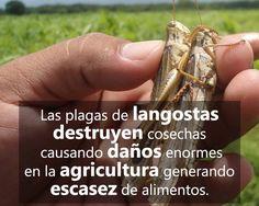 (197) Ganadería y Agricultura - Fotos