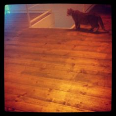 """""""You have to be a smart cat, to attend a #coworking space (Quote Tara @missrogue Hunt, Citizen Space founder)."""