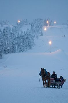 Horse Sled in the snow. Beautiful...