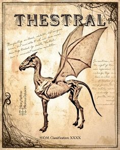 Thestral Fantastic Beasts Book Page Digital Painting Print Harry Potter Journal, Harry Potter Poster, Harry Potter Spells, Harry Potter Room, Harry Potter Universal, Harry Potter Drawings, Harry Potter Tumblr, Harry Potter Pictures, Fantastic Beasts Book