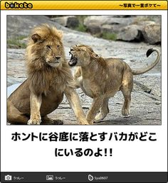 moto MEMO BOXの画像 You are in the right place about funny photo hilarious scary Here we offer you the Wtf Funny, Hilarious, Animals And Pets, Funny Animals, Funny Photos, Animal Pictures, Scary, Haha, Dog Cat