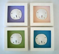 Set /4 Shadow Boxes - Sand Dollar Multi Colored Background - Nautical Beach