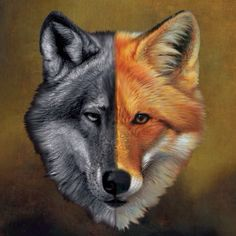 wolf fox - - Yahoo Image Search Results