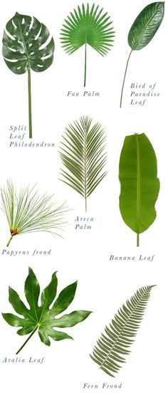 Types of palms.  Source: Justina Blakeney