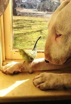 English Bull Terrier and a wavy parrot.