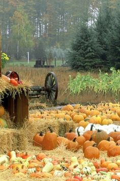Autumn harvest in the countryside of Pennsylvania.