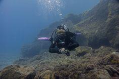 Duiken in Tenerife het hele jaar door, Nederlands duikcentrum. diving, tauchen, buceo