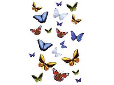 Dekoracja łazienkowa Butterfly L