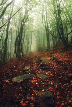 Winter Forest, France.  Fog filled woods with green moss covered trees.  Orange and red fall leaves covering  large rock filled ground.  Referenced by WHW1.com: Website Hosting - Affordable, Reliable, Fast, Easy, Advanced, and Complete.©