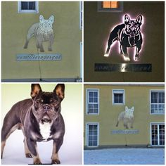 4 qm großes Edelstahl hauswandschild + 3 m Schriftzug. nach Vorlage vom eigenem Hund . LED beleuchtet.  French Bulldog