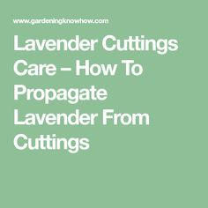 Lavender Cuttings Care – How To Propagate Lavender From Cuttings