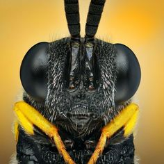 Ireneusz Irass Waledzik from Poland, uses macro photography to reveal the fascinating colours and shapes of tiny insects