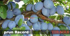 prun Record