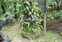 TERRA DA LUZ: Adubação: Necessidades e Cuidados nas Orquídeas