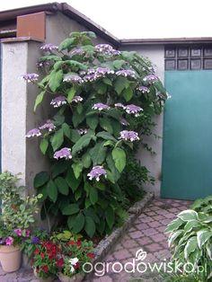 Coral Bells, Landscaping Plants, Garden Paths, Garden Projects, Gardening Tips, Lawn, Cottage, Landscape, Decor