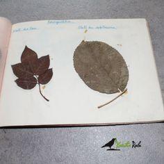 KräuterRabe, Herbarium
