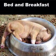 B & B - Bed & Breakfast