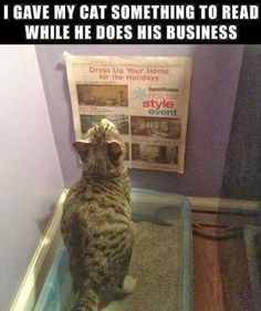Cat reading the paper while doing his business...., (: