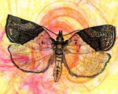 Amazing insect art by Gail Morrison. Natural Form Artists, Natural Forms, Pictures Of Insects, Nature Sketch, Bug Art, Insect Art, A Level Art, Gcse Art, Art Club