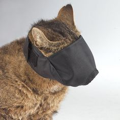 Guardian Gear Nylon Cat Muzzles — Versatile Muzzles for Cats - Medium, Black: Pet care professionals choose Guardian Gear Lined Nylon Cat Muzzles to help stop biting and chewing by difficult cats. Dog Muzzle, Feed Bags, Cat Mask, Cat Carrier, Small Cat, Cat Grooming, Dog Harness, Black Nylons, Pet Care