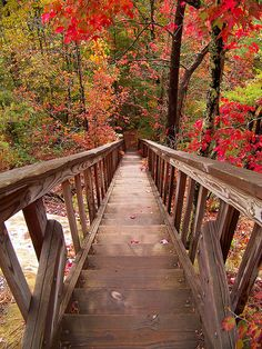 The Road To Silvermine Arch in Red River Gorge, Kentucky
